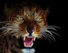 Free Mammal, Wildlife, Whiskers, Roar Stock Photo - 113639150