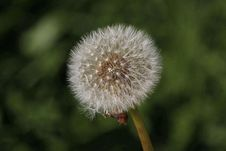 Free Flower, Flora, Dandelion, Plant Royalty Free Stock Photos - 113639178