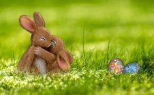 Free Grass, Fauna, Domestic Rabbit, Rabbit Stock Photos - 113639213