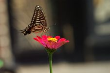 Free Butterfly, Moths And Butterflies, Insect, Flower Stock Images - 113639224