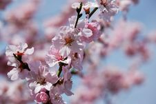 Free Blossom, Pink, Spring, Branch Stock Photo - 113639300