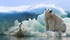Free Polar Bear, Bear, Arctic Ocean, Arctic Stock Image - 113639371