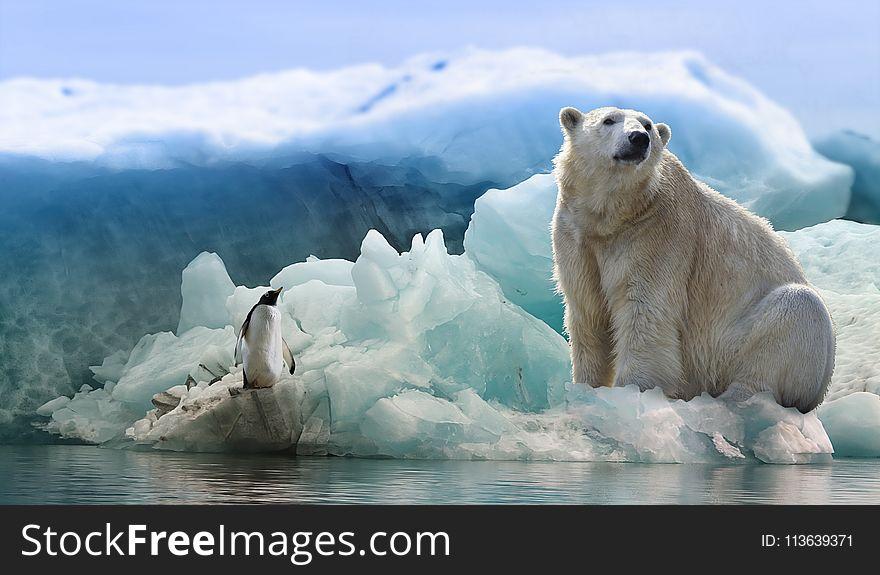 Polar Bear, Bear, Arctic Ocean, Arctic