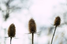 Free Selective Focus Photography Of Three Beige Flowers Stock Photo - 113641950