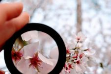 Free Person Holding Black Magnifying Glass Royalty Free Stock Image - 113642016