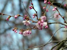 Free Blossom, Pink, Branch, Spring Royalty Free Stock Photos - 113647518