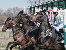 Free Jockey, Horse, Horse Harness, Horse Racing Royalty Free Stock Image - 113647576