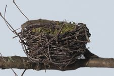 Free Bird Nest, Nest, Bird, Twig Stock Photography - 113647582