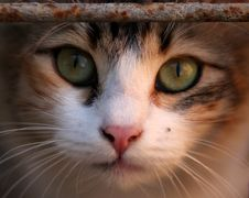 Free Cat, Whiskers, Face, Eye Stock Photos - 113647593