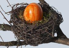 Free Bird Nest, Nest Stock Images - 113647594