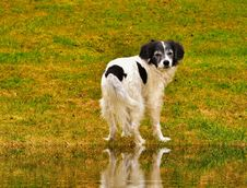 Free Dog, Dog Breed, Dog Like Mammal, Grass Royalty Free Stock Photos - 113647708