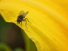 Free Insect, Fly, Pest, Macro Photography Stock Photography - 113647862