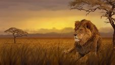Free Wildlife, Lion, Grassland, Savanna Royalty Free Stock Photos - 113648018