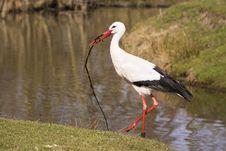 Free Bird, White Stork, Stork, Ciconiiformes Royalty Free Stock Photos - 113648158