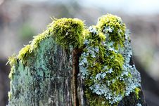 Free Tree, Branch, Plant, Moss Royalty Free Stock Images - 113648199
