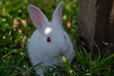 Free Rabbit, Mammal, Domestic Rabbit, Rabits And Hares Stock Photo - 113648310