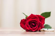 Free Flower, Rose, Rose Family, Red Royalty Free Stock Photos - 113648408