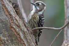 Free Bird, Fauna, Beak, Wildlife Stock Images - 113648524