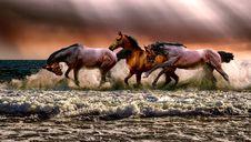 Free Horse, Horse Like Mammal, Mustang Horse, Mane Stock Photography - 113659082