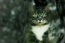 Free Cat, Whiskers, Green, Mammal Royalty Free Stock Photography - 113659087