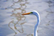Free Bird, Beak, Great Egret, Egret Royalty Free Stock Image - 113659176