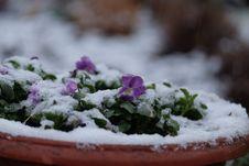 Free Snow, Flower, Winter, Freezing Stock Photo - 113659610