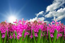 Free Flower, Plant, Pink, Sky Stock Image - 113659651