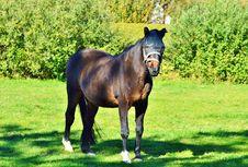 Free Horse, Pasture, Stallion, Mare Stock Images - 113659694