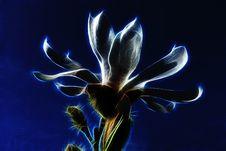 Free Blue, Flower, Flora, Light Stock Photography - 113659732