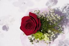 Free Flower, Rose Family, Pink, Rose Stock Photos - 113660303