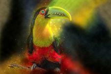 Free Toucan, Beak, Close Up, Bird Royalty Free Stock Photo - 113660605