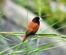Free Bird, Fauna, Beak, Old World Flycatcher Stock Image - 113660731
