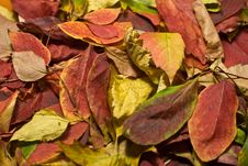 Free Autumn Beautiful Colored Leaves Stock Photo - 11378050