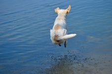 Free Dog, Dog Like Mammal, Water, Dog Breed Group Royalty Free Stock Image - 113738006