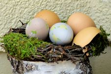 Free Egg, Bird Nest, Easter Egg, Nest Royalty Free Stock Photos - 113738078
