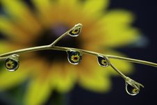Free Water, Dew, Drop, Moisture Royalty Free Stock Photography - 113738407