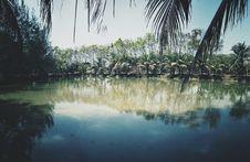 Free Photo Of Coconut Trees Near Lake Royalty Free Stock Image - 113809006