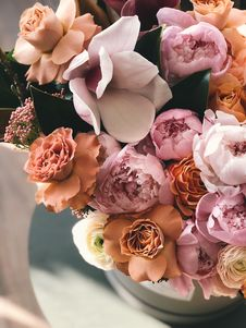 Free White, Brown, And Purple Petaled Flowers Royalty Free Stock Photos - 113809028