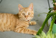 Free Orange Tabby Cat On Gray Pavement Stock Images - 113809084