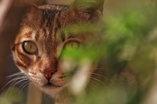 Free Selective Focus Photo Of Brown Tabby Cat Royalty Free Stock Photos - 113809168