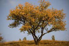 Free Tree Stock Photo - 11392410
