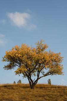 Free Tree Royalty Free Stock Photography - 11392447