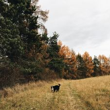 Free Short-coated Black And White Dog Standing In Forest Royalty Free Stock Image - 113907646