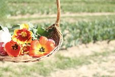 Free Assorted Flowers On Brown Wicker Basket Royalty Free Stock Photography - 113907807