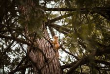 Free Selective Focus Photograph Of Squirrel On Trunk Royalty Free Stock Photos - 113907848