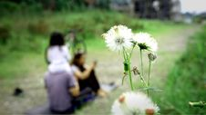 Free Selective Focus Photo Of White Dandelion Royalty Free Stock Photo - 113947525