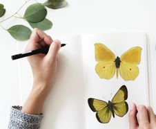 Free Photo Of A Person Drawing A Butterfly Royalty Free Stock Image - 113947546