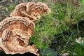 Free Strange Mushrooms Stock Photo - 1146060