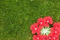 Free Dainty Petals On Moss Stock Photos - 1147643
