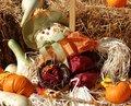 Free Friendly Scarecrow Royalty Free Stock Photo - 1147965